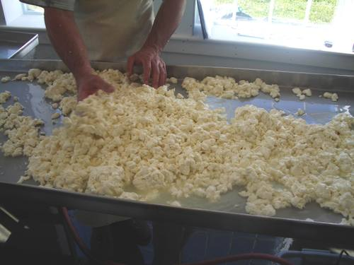 Squeaky fresh curds draining their whey