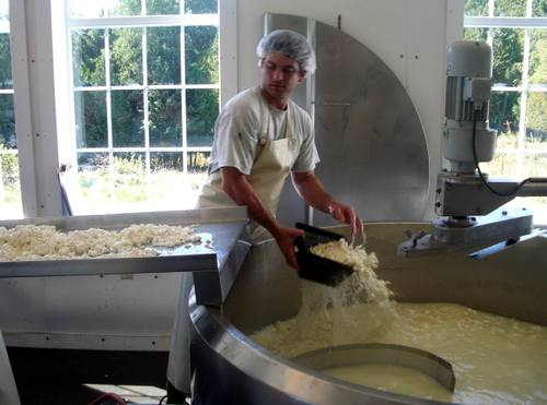 Removing the curds from the vat